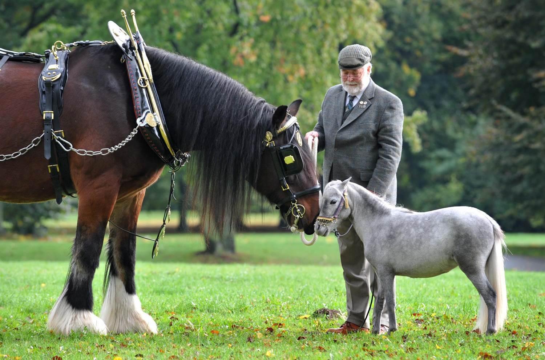 Картинки лошади высокие