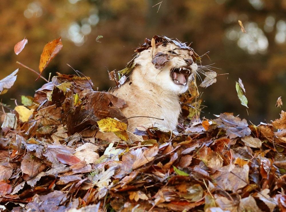Смешные картинки по осень