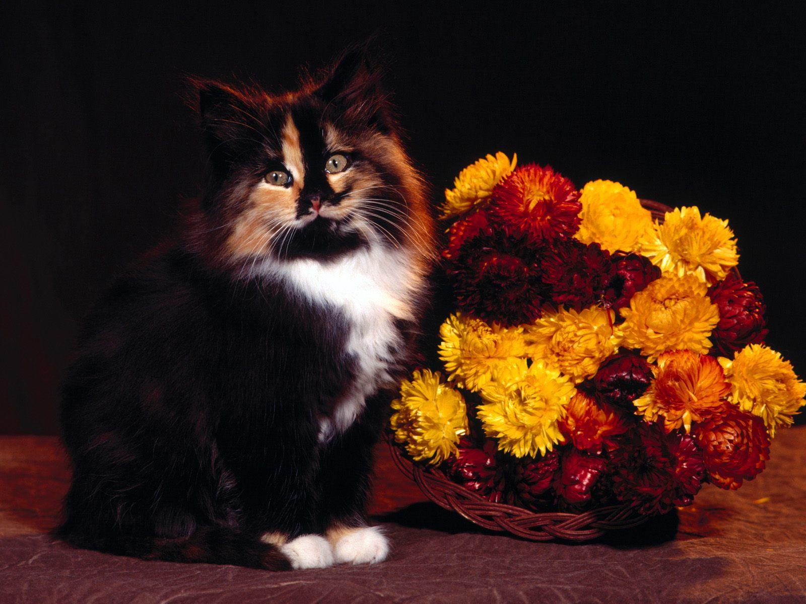 Картинки букета роз и котят