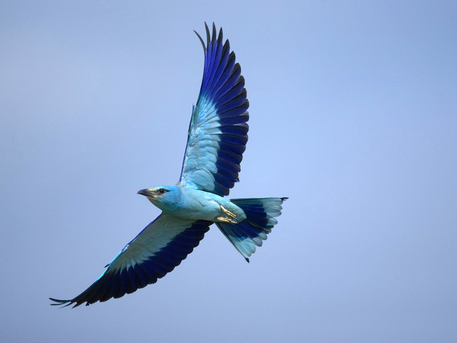 летящая птица картинки