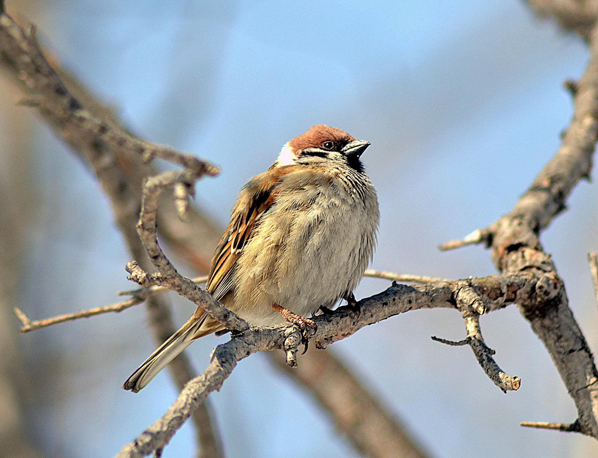 пышно картинки птиц хабаровского края держит партнёршу